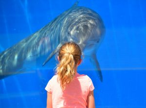 jeune fille devant un dauphin