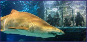 ppal-sumergete-entre-tiburones