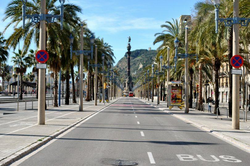 rue vide avec palmiers