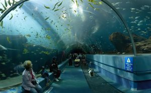 Georgia_Aquarium_-_Ocean_Voyager_Tunnel_Jan_2006-1024x632