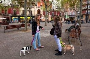 Avoir un chien a Barcelone 2
