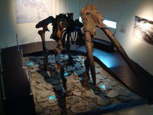 MuseeMammouthSquelette