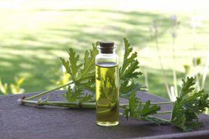 Herboriste et huile
