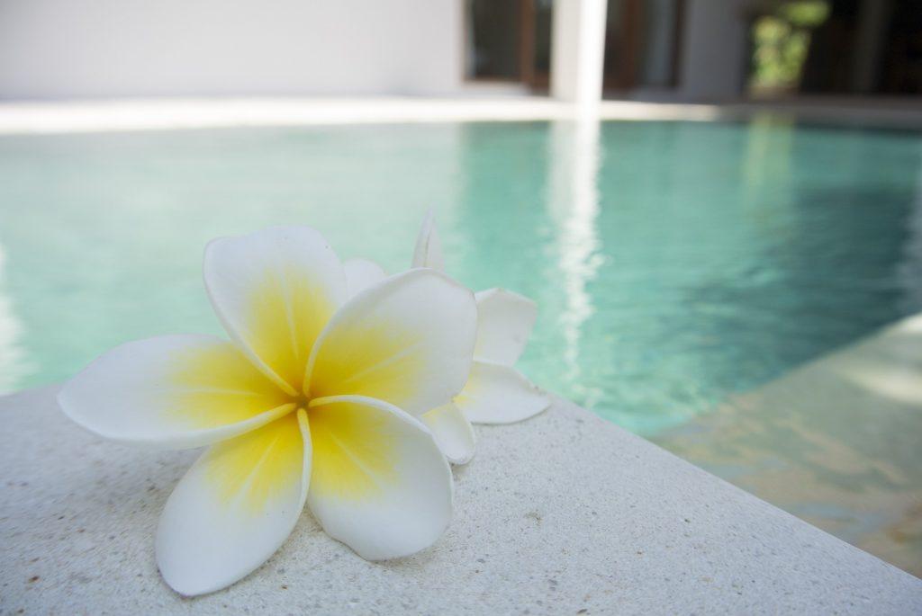 fleur près d'une piscine