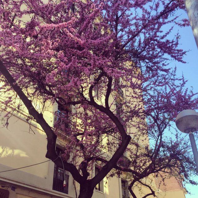 Hoy empieza la primavera! Esperamos que disfrutes la nueva estacinhellip