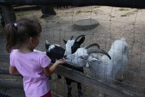 enfants zoo