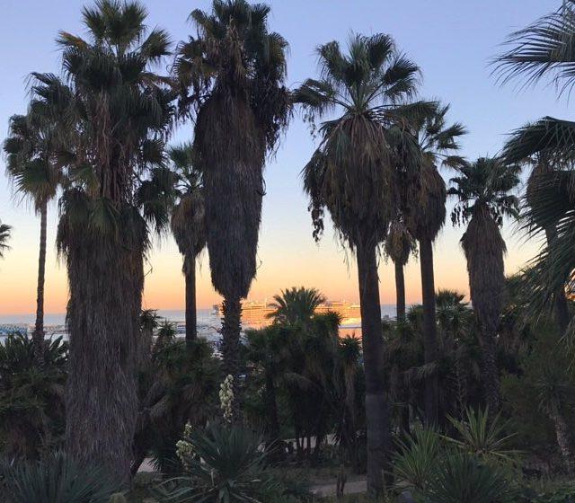 PALM TREES EVERYWHERE  barcelona bcn atardecer spain catalunya vistashellip