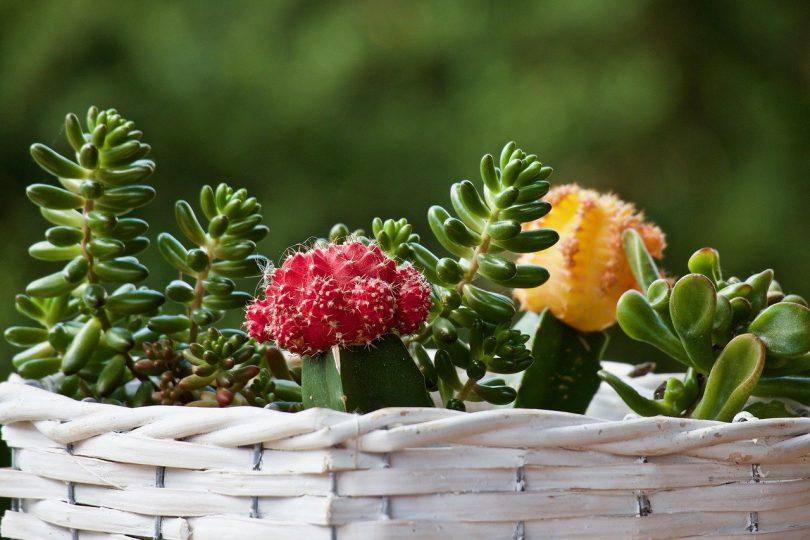 plante terrasse
