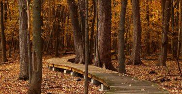 chemin en bois dans la forêt