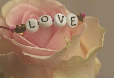 fleur rose love valentin