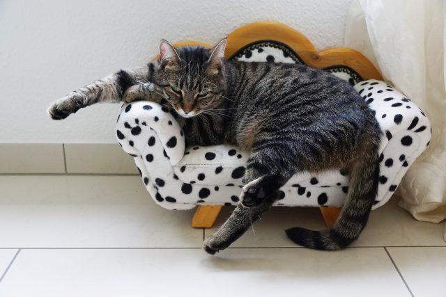 chat endormi dans son lit